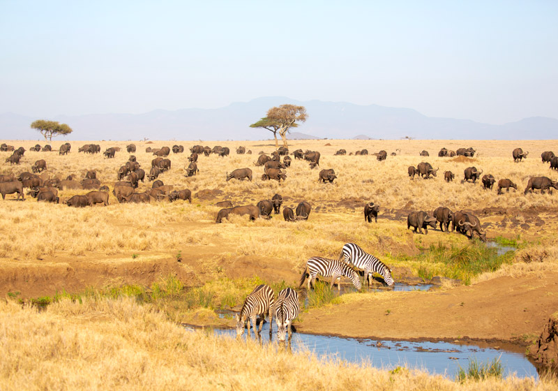 Lewa Wildlife