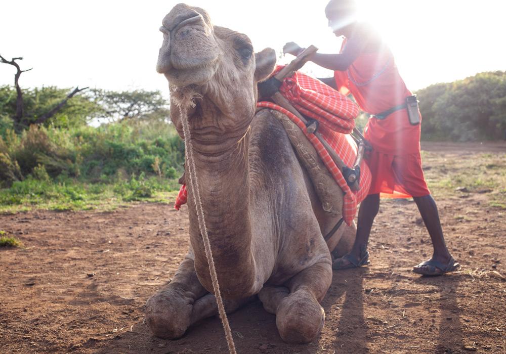 Lewa-CamelRides01